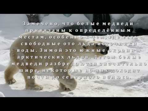 Где живут белые медведи? Развивающая презентация для детей 1 класса