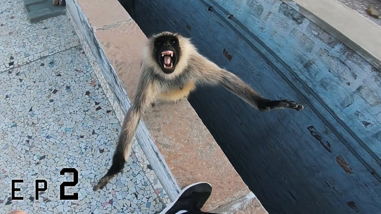 Rooftop Monkey attack!!