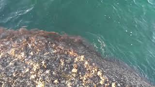 アオリイカ釣り 尻上がりに調子よくなってきました thumbnail