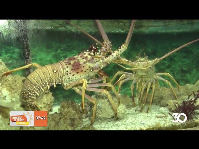 O aquário da Paraíba está funcionando de terça a domingo, no Seixas- Tambaú da Gente Manhã