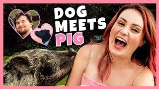 MY DOG AND I MET A PIG FOR THE FIRST TIME! W/ Ricky Dillon!