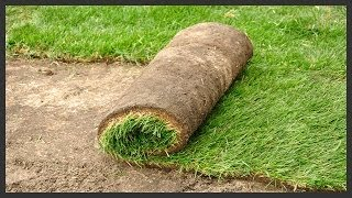 How to Install Sod.
