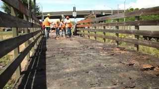 Rosa Parks Pathway: Bridge Deck Replacement