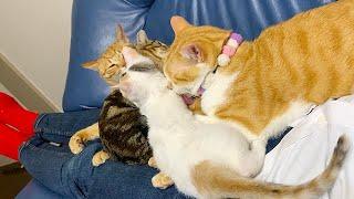 寝ているとたくさん猫が乗ってきて困っています