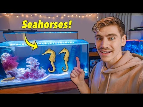 I GOT SEAHORSES! (in College) - Life Changing