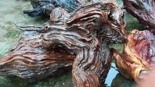 Bonsai gỗ lũa | sử lý gỗ lũa để gép phong lan