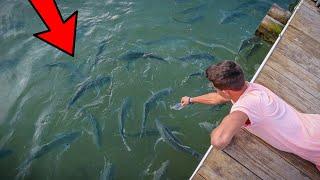 HAND FEEDING MONSTER SALTWATER FISH!!!