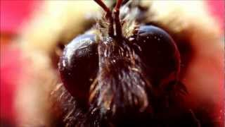 Macro video with Canon 60D, Sigma 18-50mm lens, reverse ring and extension tube