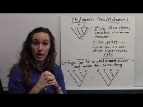 Phylogenetics and Reading Phylogenetic Trees