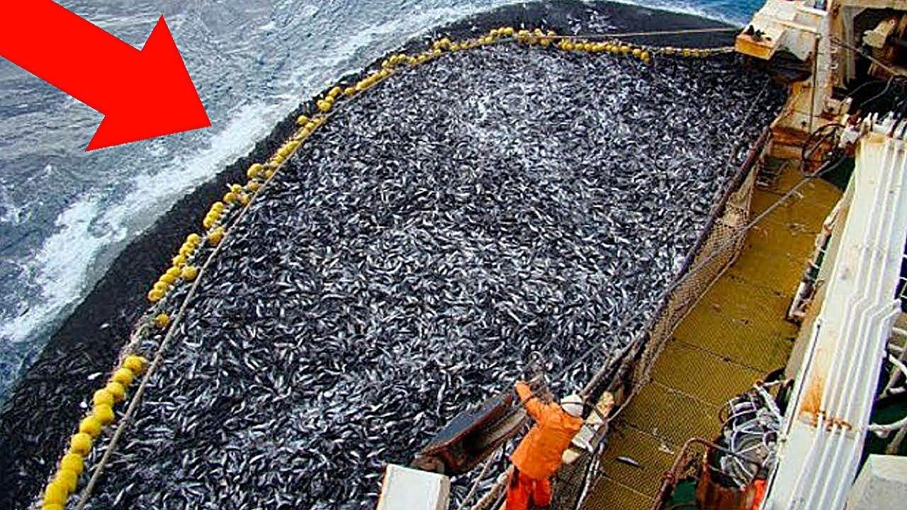 Этот Рыбак Выловил Невиданное Ранее Существо