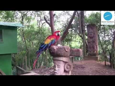 Mayan Eden Eco Park | Roatan, Honduras