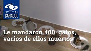Quería darles un hogar a 30 gatos y le mandaron 400 a su apartamento, varios de ellos muertos
