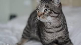 Чаплин, Волгоградский кот-инвалид ищет дом