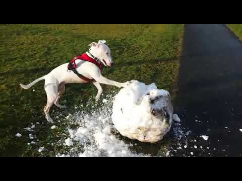 Kaiser vs Giant Snowball - Best doggy day ever!