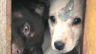 Собаки и кошки улицы.wmv