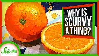 Why Scurvy Shouldn't Exist
