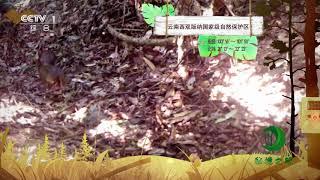 《秘境之眼》 鼷鹿 20190121| CCTV