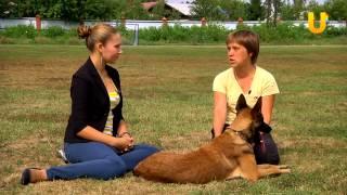 Глазами животных, выпуск 91. О бесконфликтной дрессировке собак.
