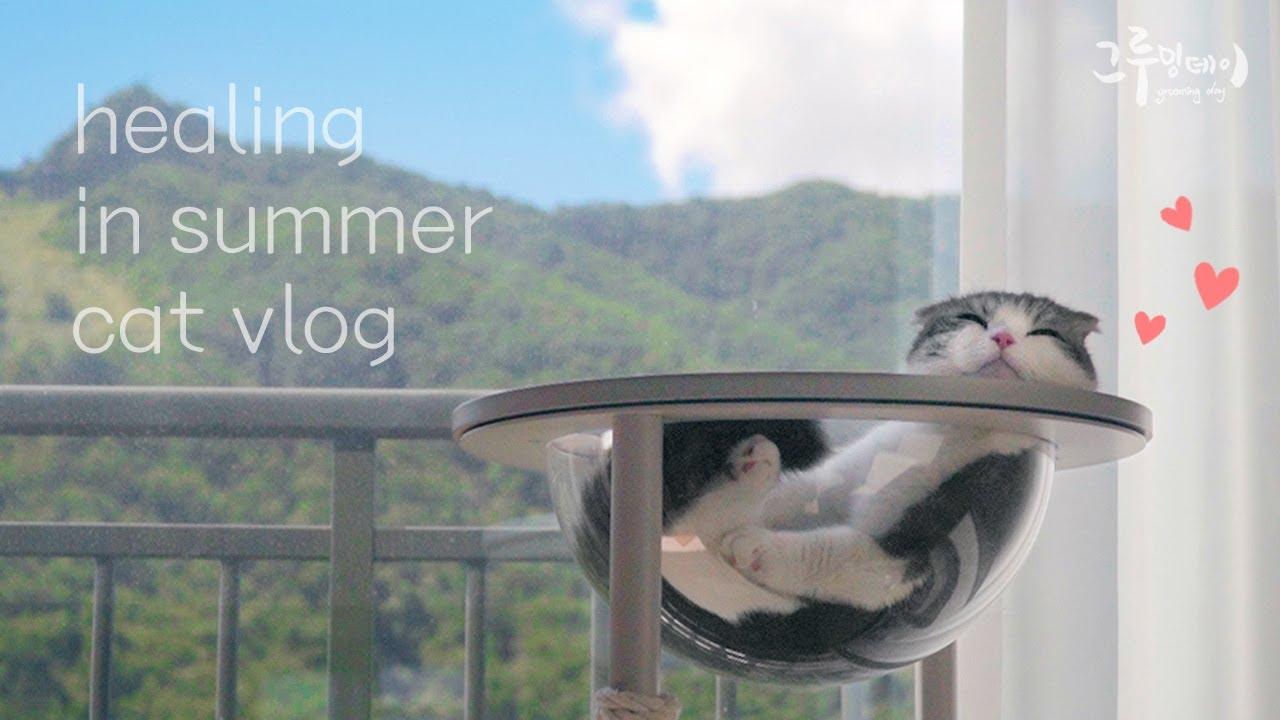 뽀송하고 기분좋은 고양이 브이로그 영상