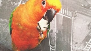 Птичка паша ест пельмени а затем танцует как пьяный.
