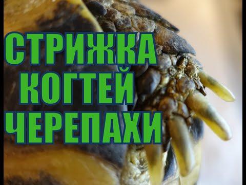 Вопрос: Нужно ли стричь когти красноухой черепахе?