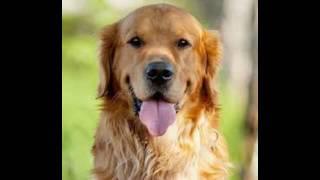 Картинки собак под музыку