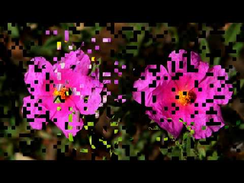Primavera en Gata. Un vídeo de ANHER publicado en www.sierradegatadigital.es