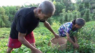 农村四哥:王四家又做泡菜了,只有简单的配料,四川家家都需要