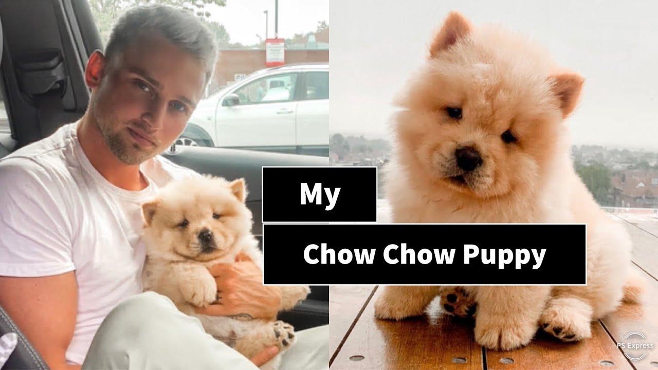 a helminták kezelése a chow chow ban)