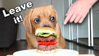 Leaving my Blind Dog Alone with a Burger! 🍔😝[Leave it Challenge]