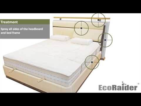 How to exterminate bed bugs by using EcoRaider