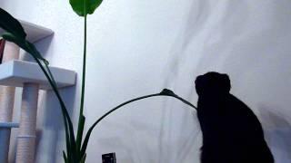 2011.7.16 猫に甚振られ続ける植物 thumbnail