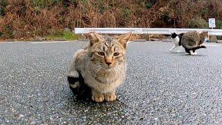 頭を撫でると飛び上がって喜ぶ子猫が可愛過ぎる