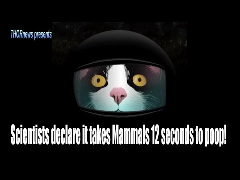 Scientists declare it only takes Mammals 12 seconds to poop!