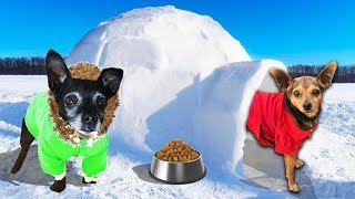 Building Our Dogs a Giant Igloo in the Snow! PawZam Dogs