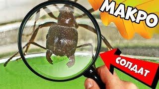 Чем занимаются муравьи-жнецы в ферме? Муравьиное реалити шоу