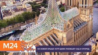 Смотреть видео На новой крыше Нотр-Дама предложили устроить сад и огород - Москва 24 онлайн