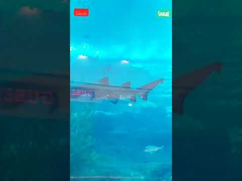 Dubai Mall Aquarium and Underwater Zoo 2019