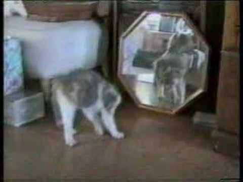 Приколы с Кошками.
