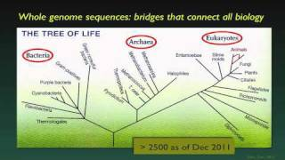 The Human Genome and Individualized Medicine - David Valle