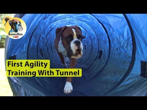 Agility Tunnel Training - Through And Over 😁