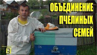 """Объединение пчелиных семей через газету Любительское пчеловодство с """"0"""" #Пчеловодство #Пасека #Пчелы"""