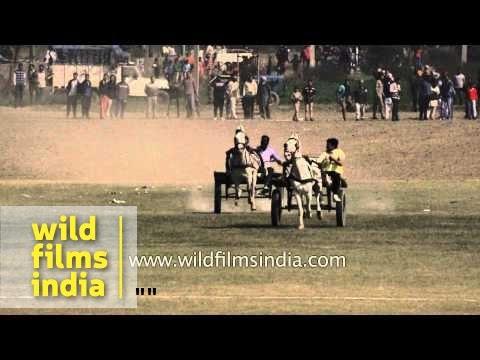 Horse cart racing at Kila Raipur