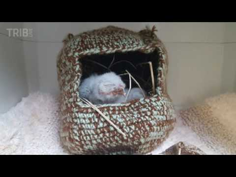 Baby owlets at Humane Animal Rescue Wildlife Center in Penn Hills