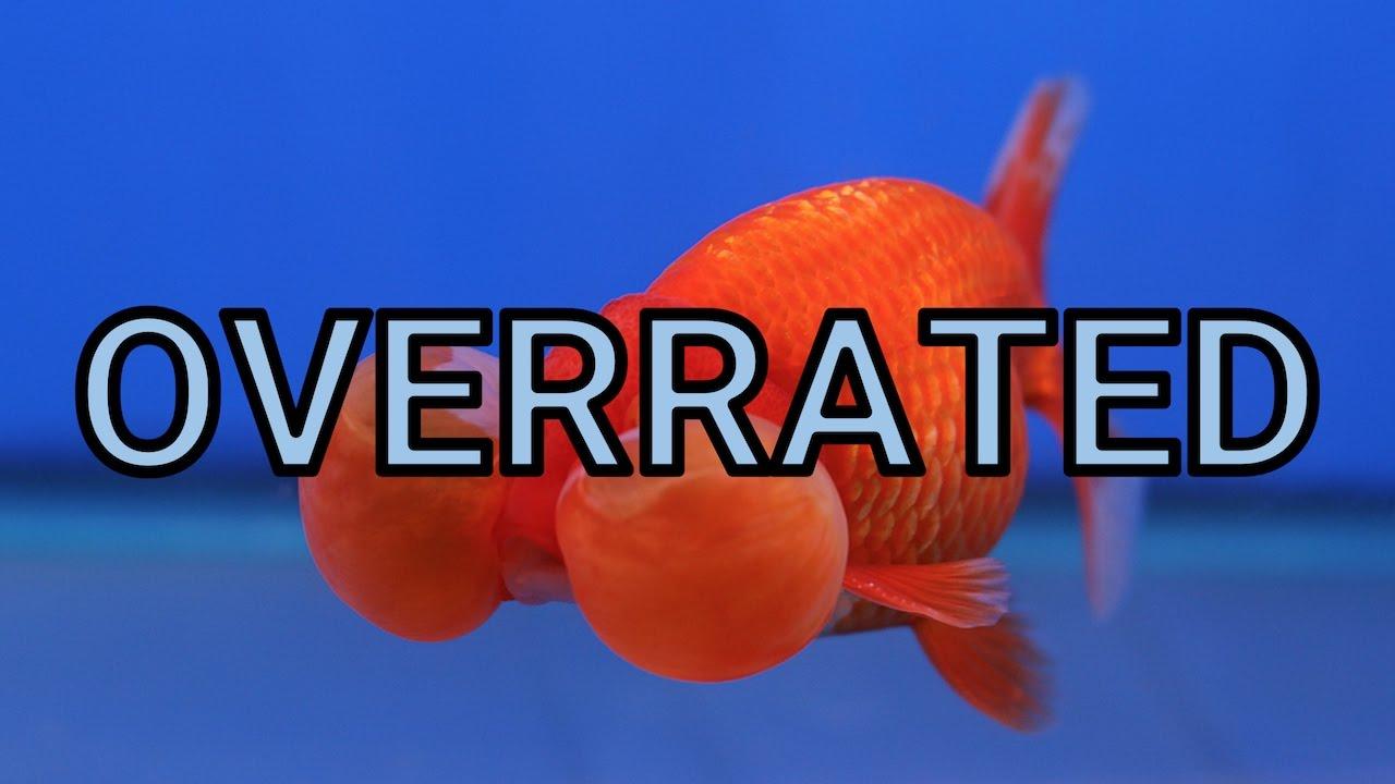 Vegetarian freshwater aquarium fish - The Top 5 Overrated Freshwater Aquarium Fish Hd