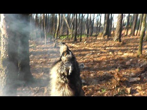 Smoking Animal Hides - The Easy Way