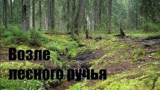Релакс: Возле лесного ручья