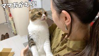 飼い主が仕事から帰ってきて嬉しくて玄関までお出迎えしちゃう親子猫