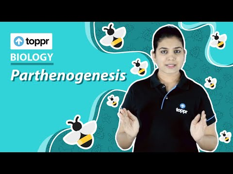 Class 12 Biology: Parthenogenesis | Reproduction in organisms (CBSE/NCERT)