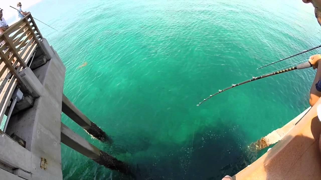 Snook fishing juno beach pier summer 2k15 youtube for Juno pier fishing report